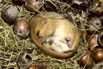 eten egels muizen