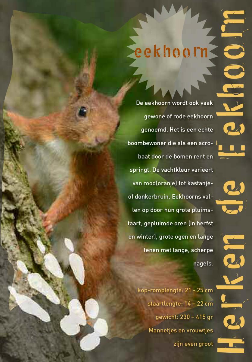 Betere Eekhoorn: knutselen en spelletjes | De Zoogdiervereniging IF-85