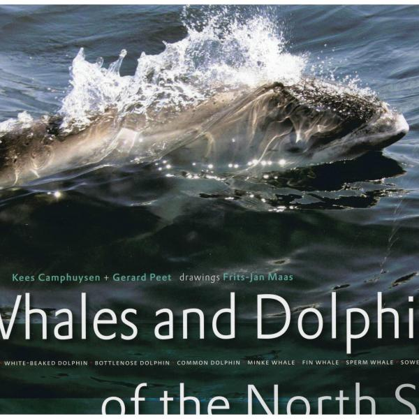whales and dolphins of the north sea